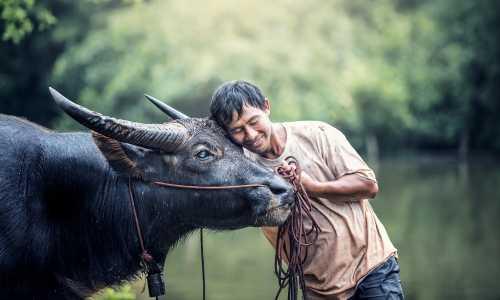 500 - Thailand allg - animals-1782431_1920
