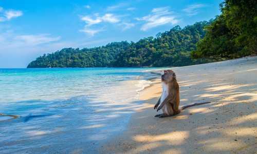 500 - Thailand allg - monkey-3251530_1920