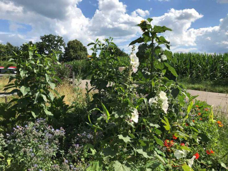 Unser Bunter Garten