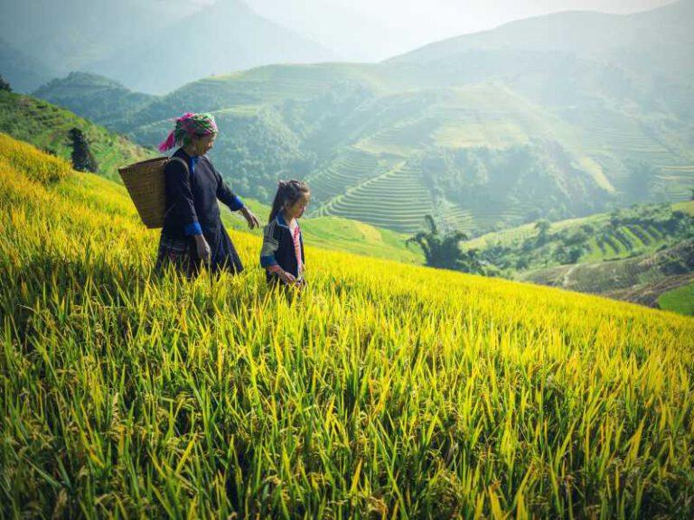 800 - Laos - agriculture-1822446_1920