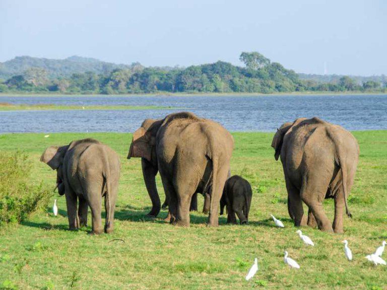 800 - Sri Lanka - elephant-4037451_1920