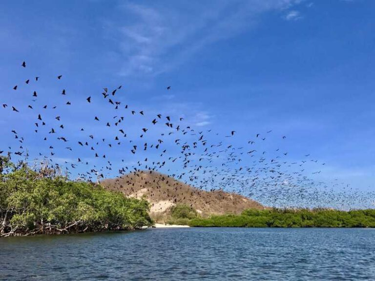 800 - Flores - The-island-of-Ontoloe-is-a-habitat-for-thousands-of-giant-bats