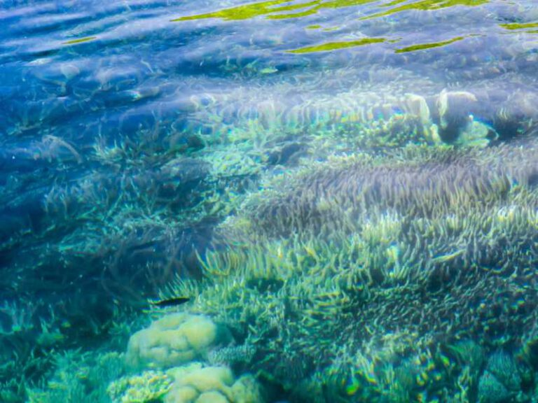 800 - Flores - defocus-coral-reef-under-crystal-clear-turquoise-water