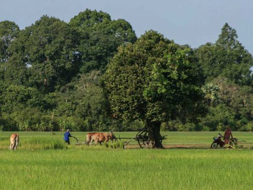 800 - Kambodscha - agriculture-1527454_1920