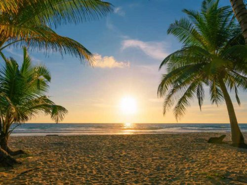 800 - Malediven - beach-autumn-vacations-concept-background-nature-frame-with-coconut-palm-trees-on-the-beach-with-sun-light-flare-beautiful-sunset-or-sunrise-landscape-background