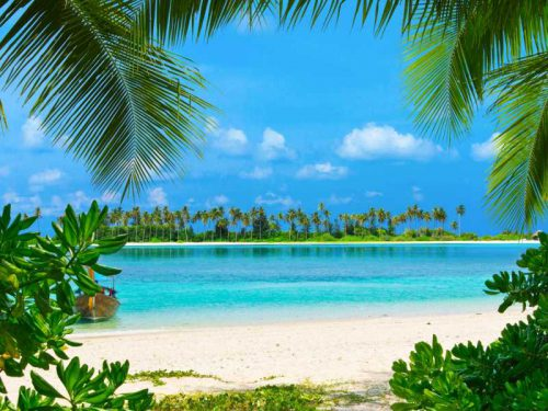 800 - Malediven - tropical-beach-in-maldives-with-few-palm-trees-and-blue-lagoon(1)