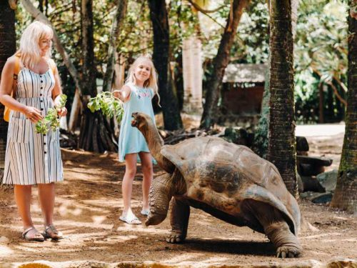 800- Mauritius - fun-activities-in-mauritius-family-feeding-giant-tortoise-in-the-zoo-of-the-island-of-mauritius