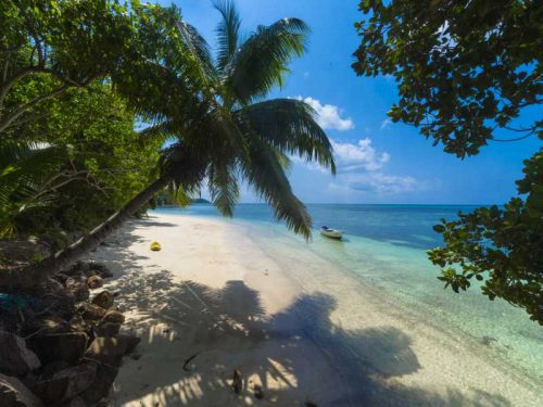 800 - Seychellen - palm-tree-at-a-beach-surrounded-by-greenery-and-the-sea-under-the-sunlight-in-praslin-in-seychelles