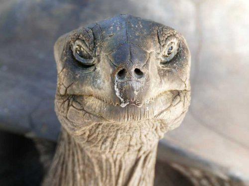800 - Seychellen - tortoise-2893807_1280