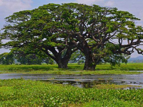800 - Sri Lanka - nature-3762842_1920