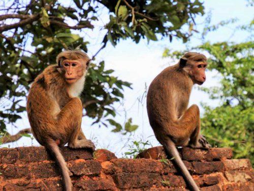 800 - Sri Lanka - para-3208958_1920
