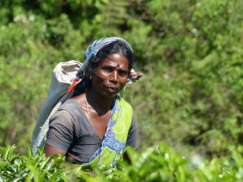 800 - Sri Lanka - woman-4826985_1920
